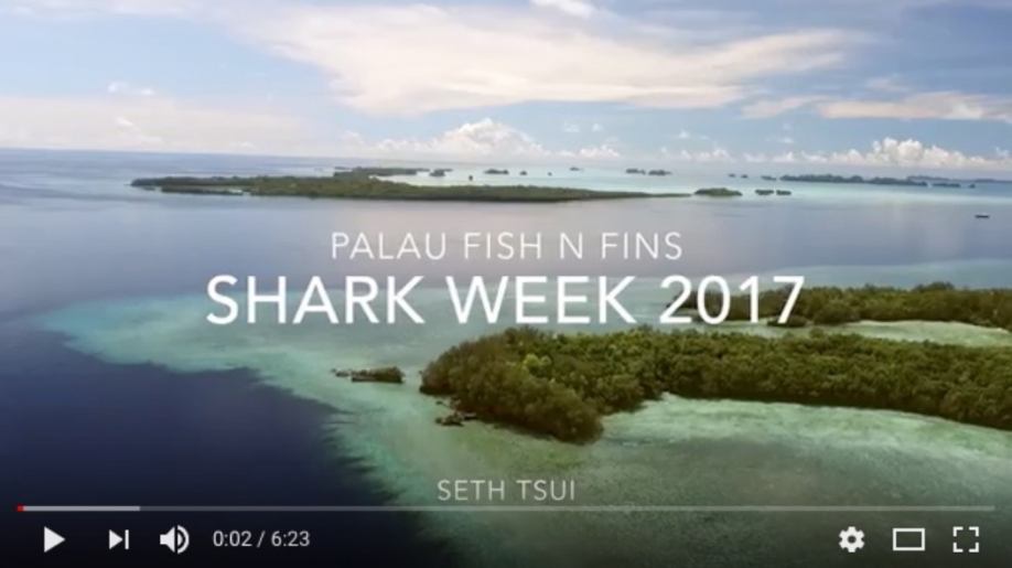 Shark Week 2017 Video by Seth Tsui